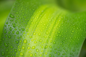 Green leaf with water drops for background - Image