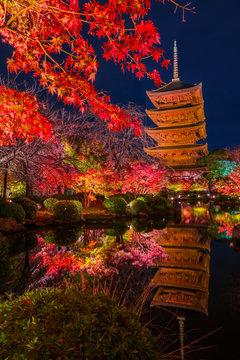 京都 東寺の紅葉 夜景