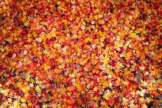 カラフルな落ち葉のテクスチャ / 秋のイメージ