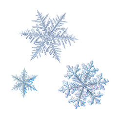 Three snowflakes isolated on white background. Macro photo of real snow crystals: elegant stellar dendrites with ornate shapes, hexagonal symmetry, glossy relief surface and complex details inside.