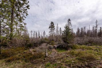 Toter Wald, dead Forrest.