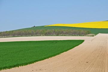 Campagna e campi di colza a a hervelinghen, Pas-de-Calais, Hauts-de-France