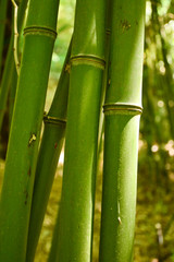 Zelfklevend Fotobehang Bamboe bamboo, young, stem, grows, green, park, grove,