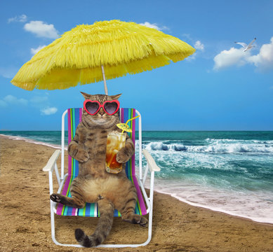 The cat in sunglasses under a yellow umbrella drinks cocktail on a beach chair on the sea shore.