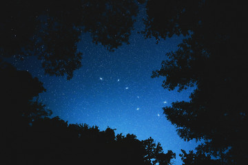 Constellation big dipper in the night forest