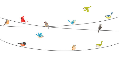 Colorful birds sitting on wire isolated on white Fotobehang
