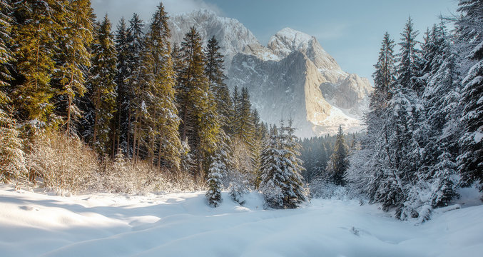 Majestic Mountain Winter Landscape. Breathtaking Alpine Highlands in Sunny Day. impressively beautiful Winter Forest under Sunlight. Inscredible Wintry Scene. Picture of wild area. Postcard.
