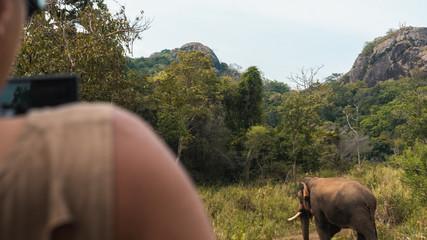 Cameraman shooting wild elephant in safari jeep in Sri Lanka