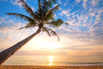 Wall Mural - Seascape of beautiful tropical beach with palm tree at sunrise. sea view beach in summer background.