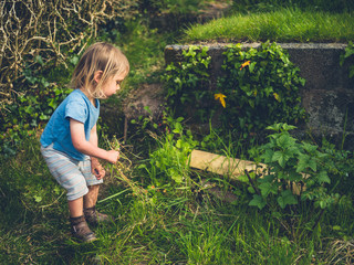 Little toddler pulling up weeds in the garden
