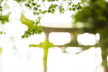 日本の鳥居と緑のモミジ