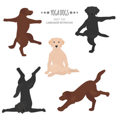 Yoga dogs poses and exercises. Labrador retriever clipart