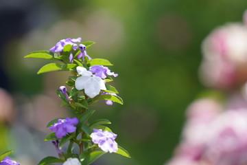 アゲハ蝶と花