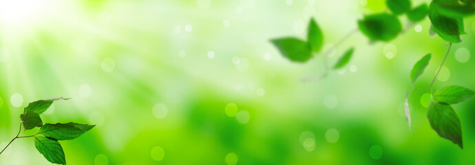 Fresh green leaves on a shiny background