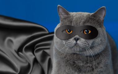 Papier Peint - Fat cat in superhero mask