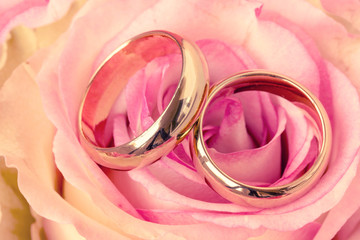 Two wedding rings with beautiful rose flower