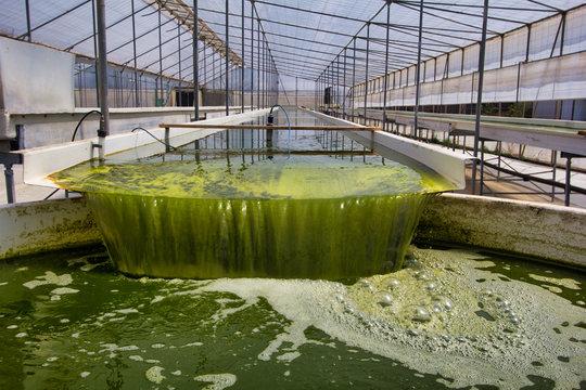 Raceway fotoreactor abierto para el cultivo de micro algas dentro de un invernadero