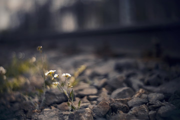 Blurred background with railway rails and growing flowers