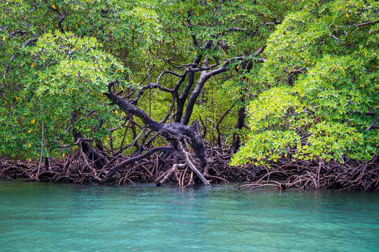 Scenic seaside view of tranquil mangrove swamp landscape on the coast of Bahia, Brazil