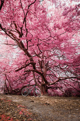 Mountain bike under bright pink tree