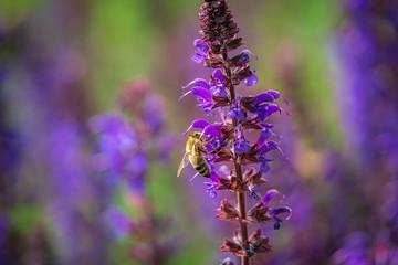 Biene an Blume, Weltbienentag, Biene und Blüte
