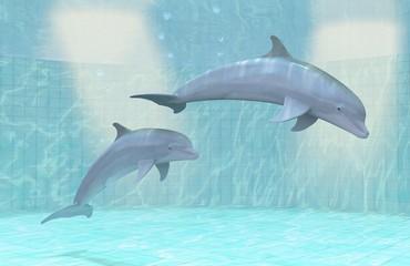 Dolphins • Dolphin basin • Dolphinarium