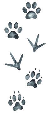 Animal and bird footprints. Hand-drawn watercolor illustration.