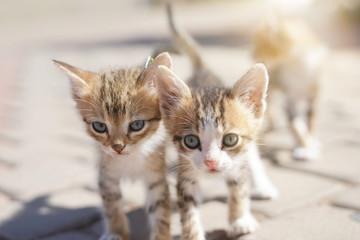 Closeup of wild kitten in the street