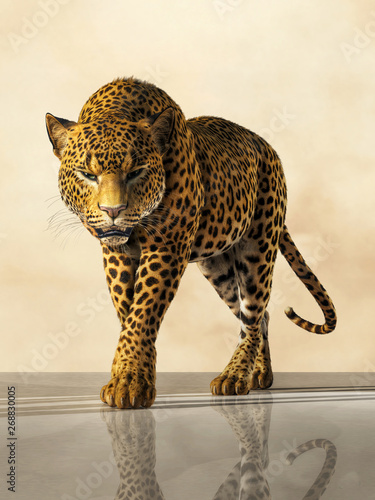 A portrait of a leopard  This predator stands on a