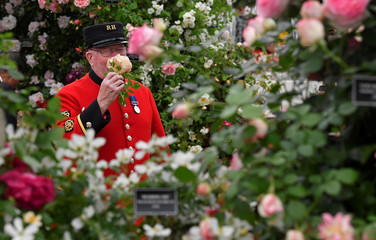 A Chelsea Pensioner smells a Rose at the RHS Chelsea Flower Show at the Royal Hospital Chelsea, London