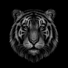 Monochrome, black and white graphic, hand-drawn portrait of a tiger looking ahead on a black background.