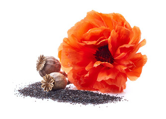 Poppyhead with seeds and flower