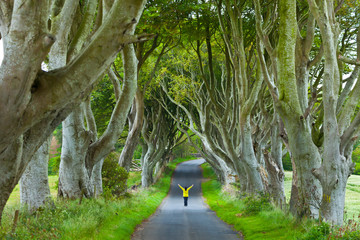 Fototapeta The Dark Hedges. Ballymoney Countryside. Antrim County, Northern Ireland, Europe
