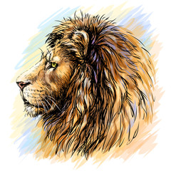 Sketchy, graphical, color profile portrait of a lion's head on a purple background in pop art style.