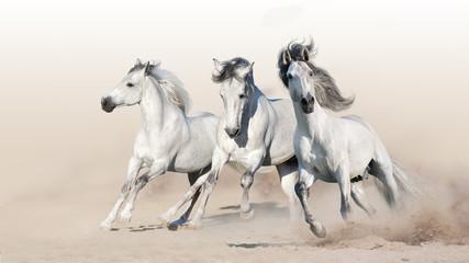 Wall Mural - Three white horse run gallop on desert dust