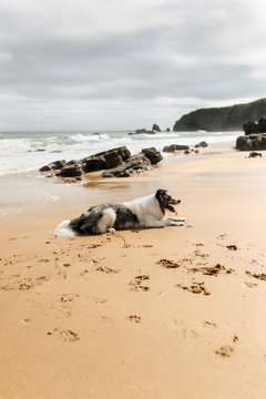 Border Collie playing on the beach