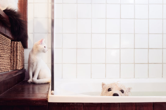 Two cats keeping their dog friend company during the bath