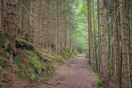 Hiking trail near the village of Wengen, Switzerland
