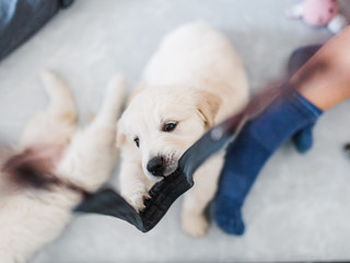 Puppy chewing camera strap
