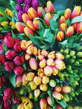 Closeup of several tulip bouquets seen from above.