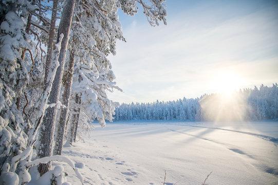 Snowy landscape in Lapland