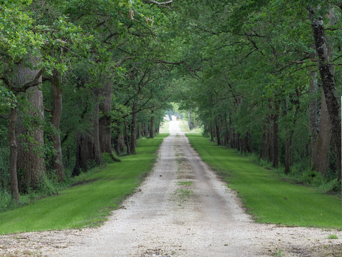 A driveway leads into the distance lined by green leaved trees on either side. tony skerl
