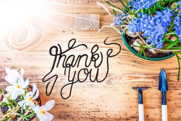 English Calligraphy Thank You. Sunny Spring Flowers Like Grape Hyacinth And Crocus. Gardening Tools Like Rake And Shovel
