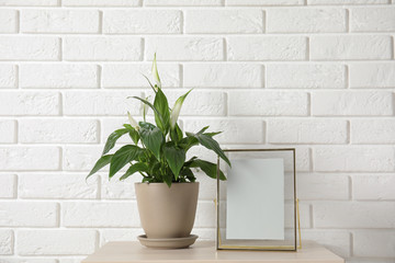 Spathiphyllum plant in pot and photo frame on table near brick wall, space for design. Home decor