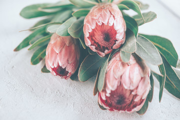 Fotoväggar - Protea buds closeup. Bunch of pink King Protea flowers over grey background. Valentine's Day bouquet