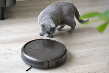 Cat and robotic vacuum cleaner in the room. Fluffy british shorthair cat is playing with a robotic vacuum.