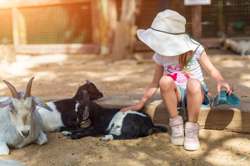 little girl feeds a goat at a childrens petting zoo