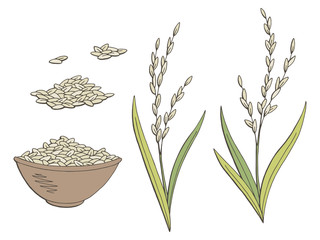 Rice plant graphic color isolated sketch illustration vector