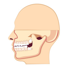 Human head with teeth. Jaw and wisdom tooth inside