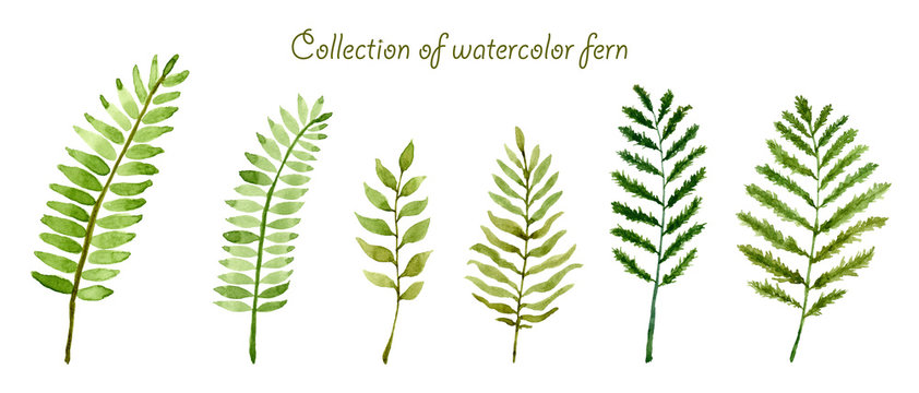 Set of collection watercolor fern